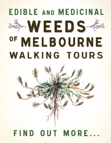 Find out more about the Melbourne Edible and Medicinal Weed Walks