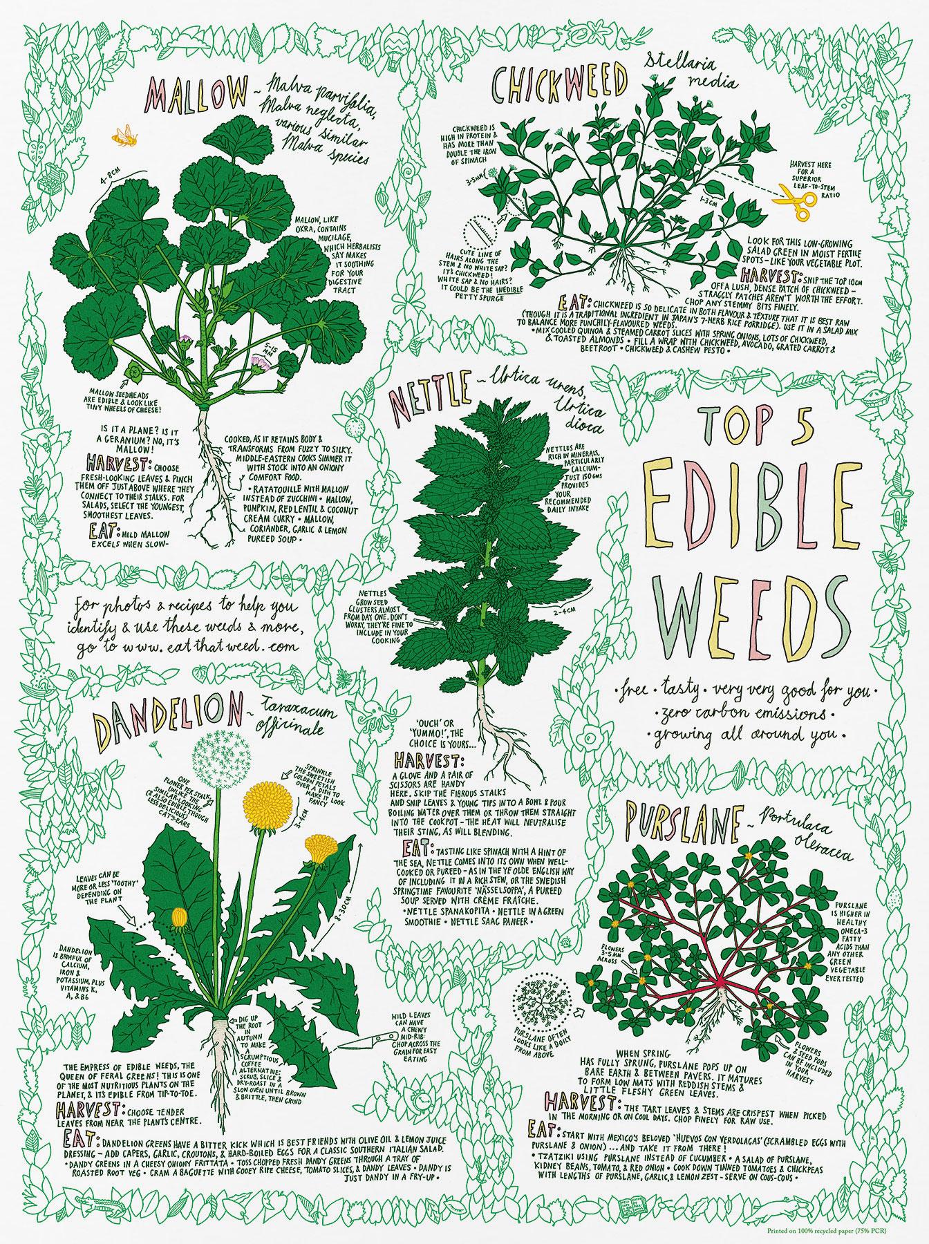 Top 5 Edible Weeds poster